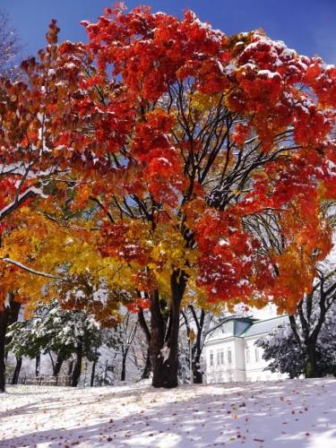 紅葉に雪化粧