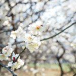【今週の天気】春と冬を繰り返し