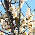 【今週の天気】春へ前進も 一時的に冬型