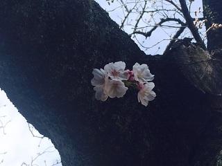 【週末の天気】天気下り坂 関東は冬の寒さに
