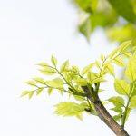 【暦のコト】春分と秋分って、そんなに違うの?