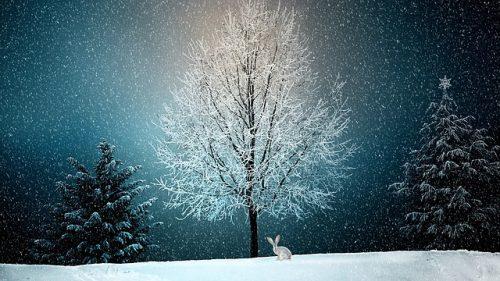 天気の言葉】雪の表現、あれこれ | ライフレンジャー トピックス